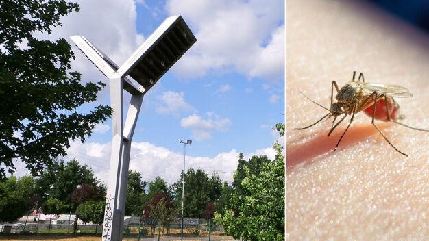 Radni chcieli oprysków na komary. Ratusz stawia na jerzyki
