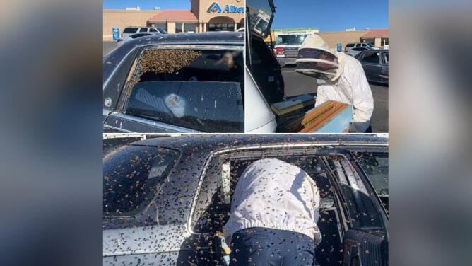 Wrócił z zakupów i znalazł w aucie rój 15 tysięcy pszczół
