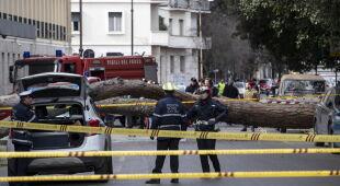 Drzewo spadło na samochody w Rzymie (PAP/EPA/MASSIMO PERCOSSI)