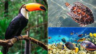 """Alarmujący raport WWF: """"To będzie koniec różnorodności biologicznej na planecie"""""""