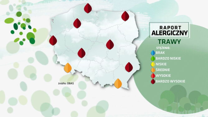 Raport alergiczny. Bardzo wysokie stężenie pyłków traw w większości kraju