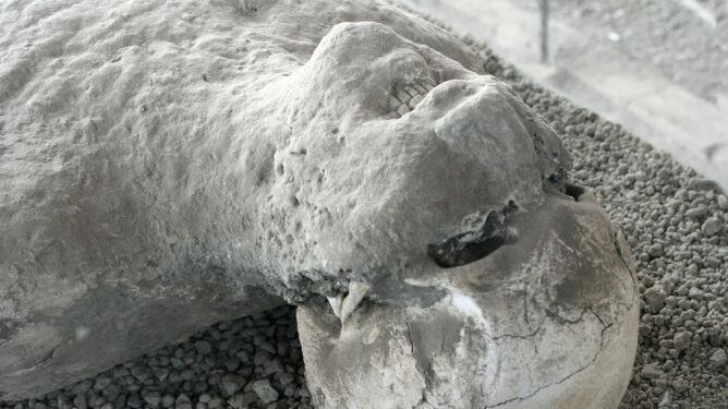 Ofiary z Pompejów