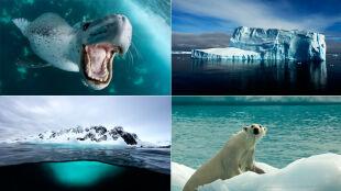 """""""Trzy sztuki w Antarktyce"""". Polscy artyści będą tworzyć na końcu świata"""