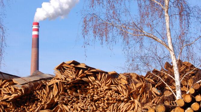Biopaliwa wcale nie takie zdrowe