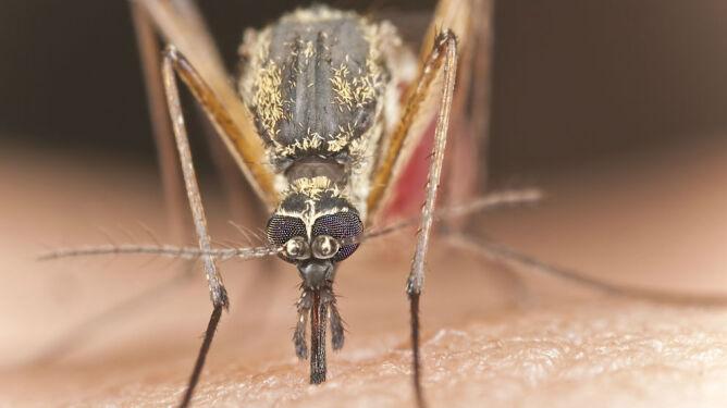 Czy można wygrać z komarami? Nie