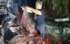 40 kilogramów torebek plastikowych w żołądku wala