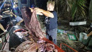 40 kilogramów plastiku w żołądku wieloryba. Przed śmiercią wymiotował krwią